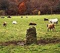 Standing Stone near Poldean - geograph.org.uk - 1043350.jpg