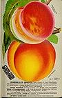 Stark fruits (1896) (20356616020).jpg
