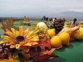 Starr-111004-0566-Cucurbita pepo-habit and pumpkin display-Kula Country Farms-Maui (25000150692).jpg