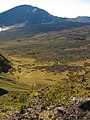 Starr-121018-1021-Cortaderia jubata-seeding habit view Hanakauhi-Halemauu Trail HNP-Maui (24826611269).jpg
