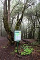 Starting point of Cañada de Jorge hiking trail in the Garajonay National Park on La Gomera, Spain (48293706456).jpg