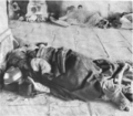 Starving Armenian refugees.png