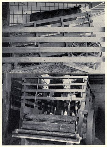 English: Treadmill in which steers were exercised.