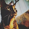 Stitch on the Couch 03312018.jpg