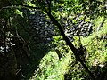 Stone Wall and Foliage - Gifu Castle - Gifu - Japan (47925952551).jpg