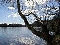 Straszyn jezioro 2.jpg