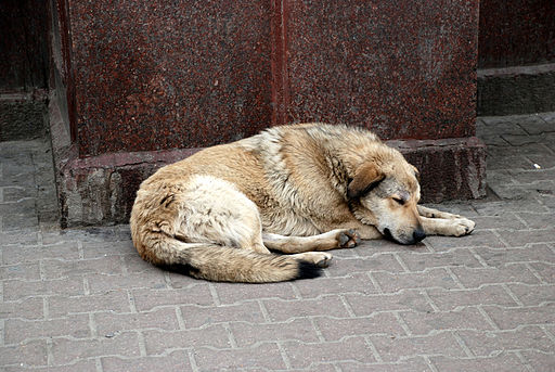 Sochi Olympics Horror for Stray Dogs Called