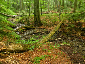 Primeval Beech Forests of the Carpathians and Other Regions of Europe - Stužica primeval forest