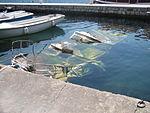 Sunken boat in Perast.jpg