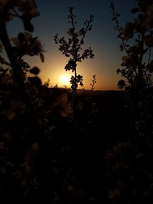 Sunset in Palestine 4.jpg