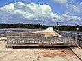Suriname 2008 Carolina1.jpg