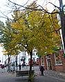 Sutton High Street trees (14).jpg