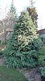 TFL Christmas Tree (4202039899).jpg