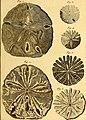 Tableau encyclopédique et méthodique des trois règnes de la nature (1791) (14581604778).jpg