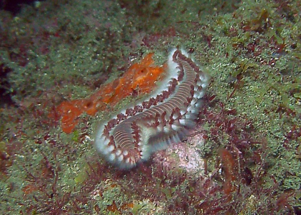 Tayrona Diving 7
