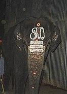 Temple elephant 2