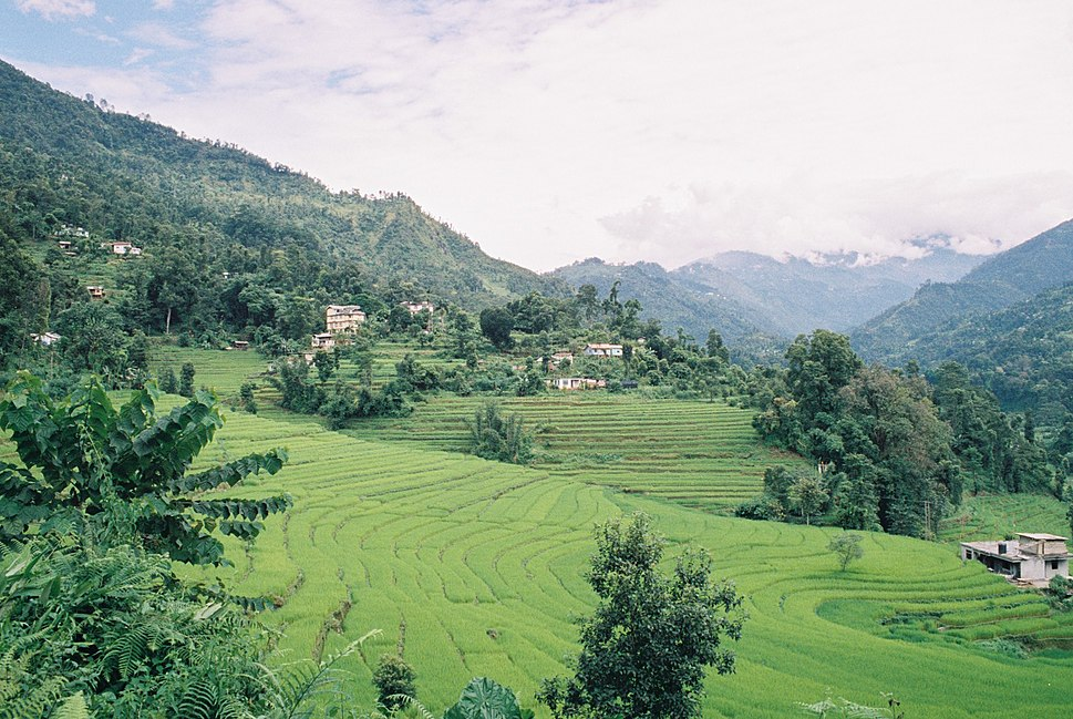 Terraced rice fields of Sikkim India