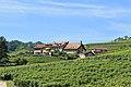 Terrasses de Lavaux - panoramio (87).jpg