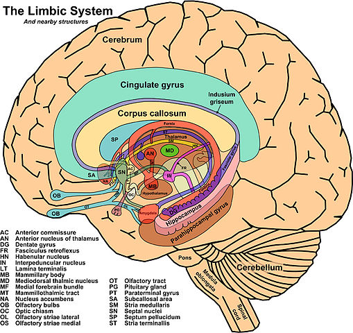 File:The Limbic System and Nearby Structures - John Taylor ...
