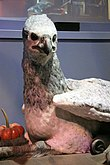 The Making of Harry Potter 29-05-2012 (Buckbeak's bust).jpg