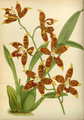 The Orchid Album-02-0033-0058.png