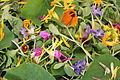 The Scandinavian Permaculture festival of 2013 - 15 Flower salad.JPG