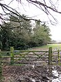 The Shire Hedge (Bucks-Herts boundary at Tring) - geograph.org.uk - 1197713.jpg