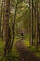 The Triglavska Bistrica Trail in the Vrata Valley in Slovenia's Julian Alps.jpg