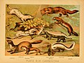 The animal kingdom (Plate XIX) (6130246236).jpg