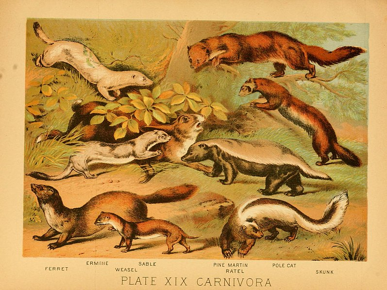 File:The animal kingdom (Plate XIX) (6130246236).jpg