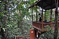 The canopy walk starts here (11967371884).jpg