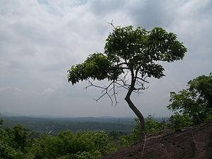 Thiruvilwamala - Thiruvilwamala Hill