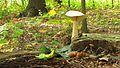 The mushrooms. September 2015. - Грибочки. Сентябрь 2015. - panoramio.jpg