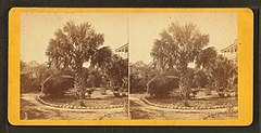 The palmetto tree, Charleston, S.C, by Quinby & Co..jpg