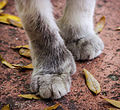 These feet were made for walking....... (8535386122).jpg