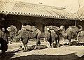 Thomas Child, Parade of Camels.jpg