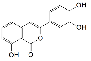 Thunberginol A