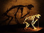 Upright reconstruction of a Thylacoleo skeleton inside Naracoorte Caves, its shadow cast against the cave wall