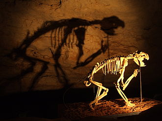 Naracoorte Caves National Park - Skeleton of a marsupial lion (Thylacoleo carnifex) in the Victoria Fossil Cave