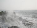 TomCorser Wild Sea Cot Valley Conwall IMG 5575.JPG