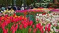 Tonami Tulip Fair 2019a.jpg