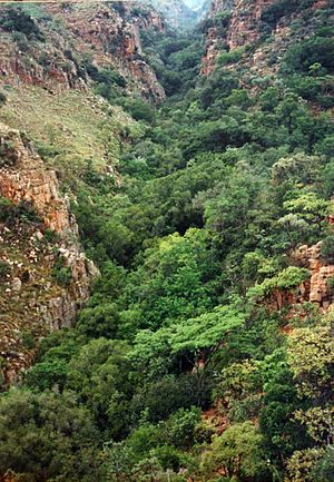 Magaliesberg - Tonquani Kloof in the Magaliesberg