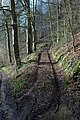 Track in Worksman Wood - geograph.org.uk - 669890.jpg