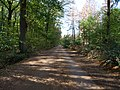 Track in the Hambach forest 05.jpg