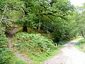 Track meets footpath in the Forest of Dean - geograph.org.uk - 1511030.jpg
