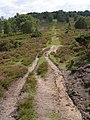 Track up Whitefield Hill, New Forest - geograph.org.uk - 502672.jpg