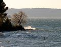 Tree waves on Lake of Bracciano.jpg
