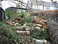 Trees down, Omagh - geograph.org.uk - 359988.jpg