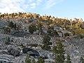 Trees on the ridge, late afternoon (3090858974).jpg