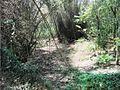 Trekking @ Wayanad wildlife Sanctuary - panoramio (1).jpg